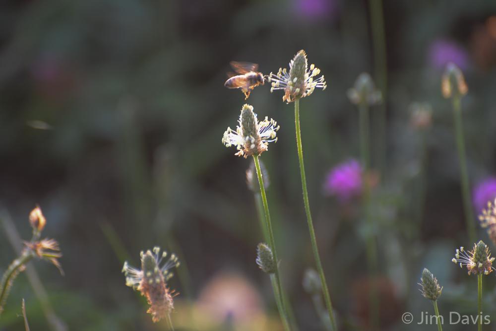 Flora-9088.jpg