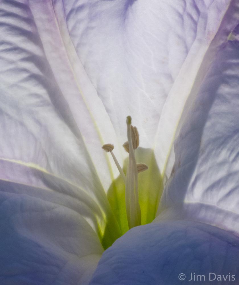 Flora-1000656.jpg