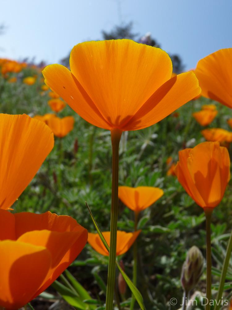 Flora-1040877.jpg
