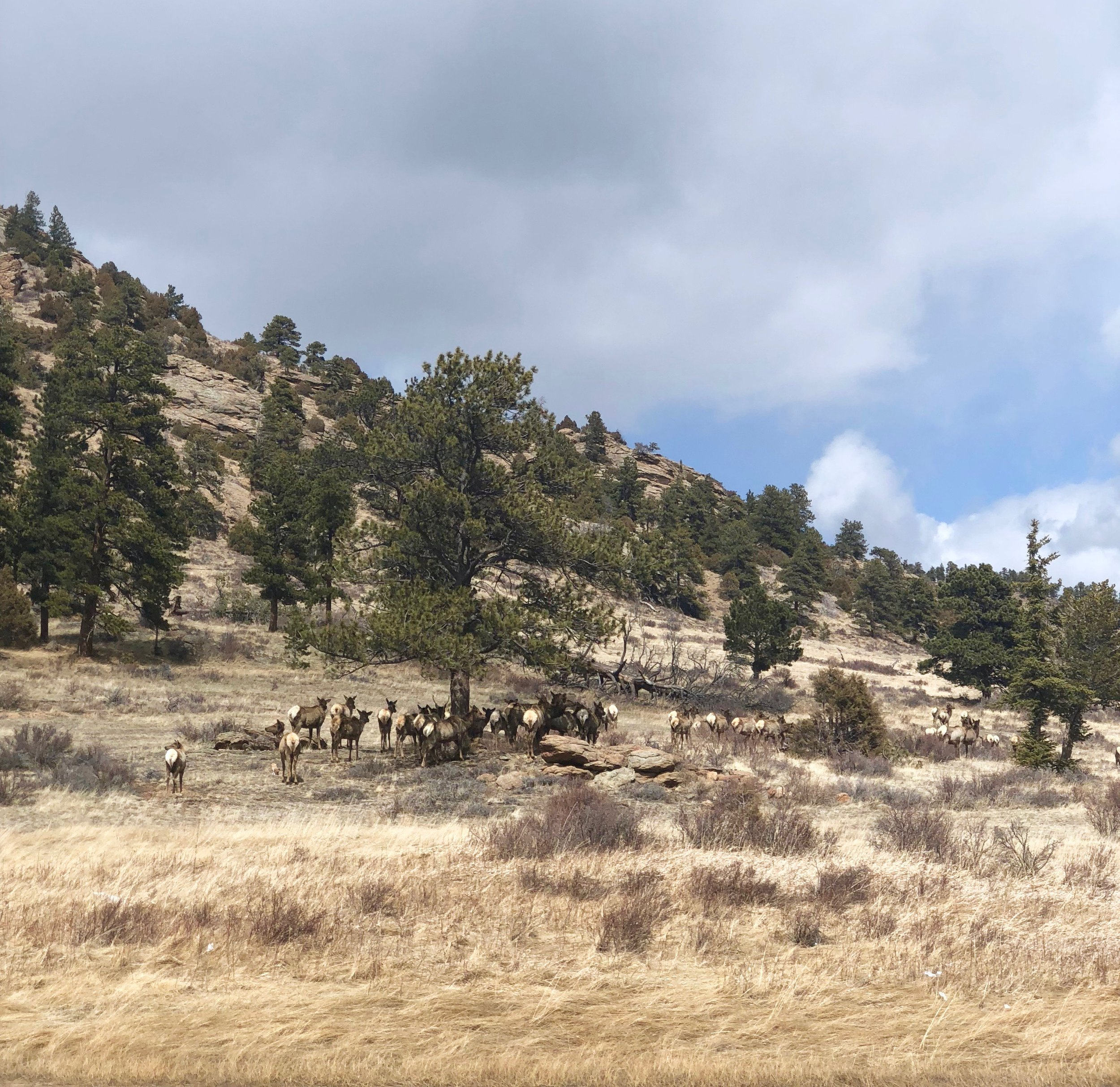 Coloradophotojournal.jpg