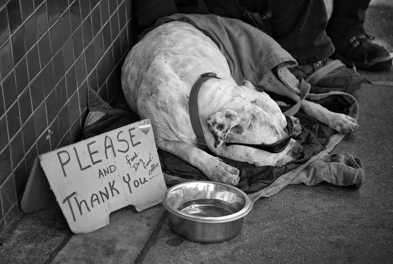 Begging dog.jpg