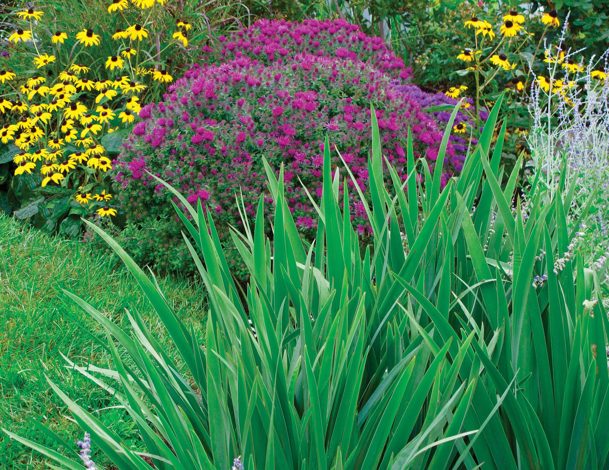 05 Flowers Purple.jpg