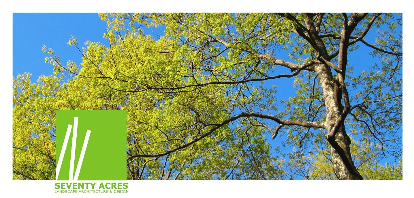 01+Spring+Tree_.jpg