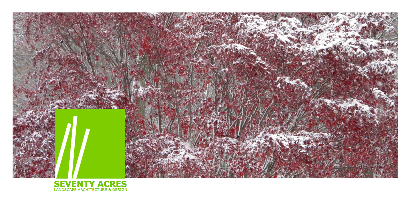 _02+Red+Maple+Snow_web.png