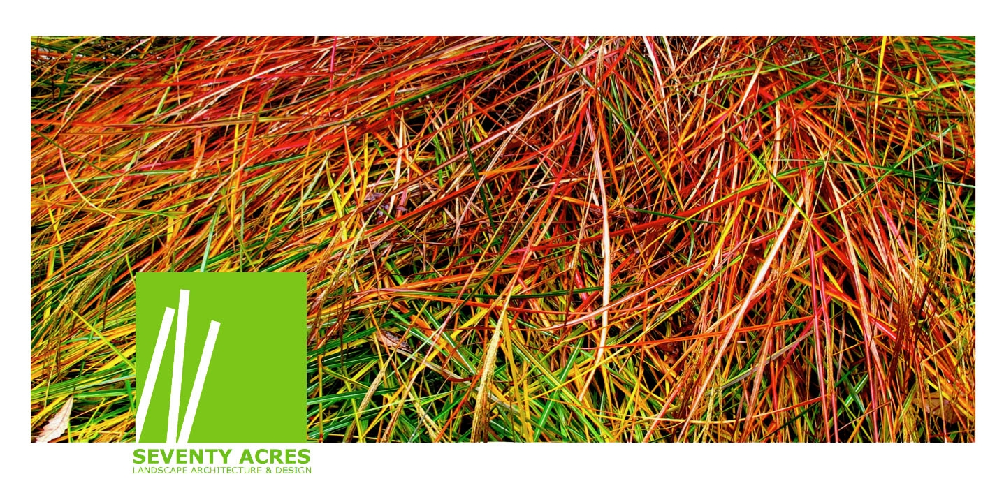 15+Fall+Grasses.jpg