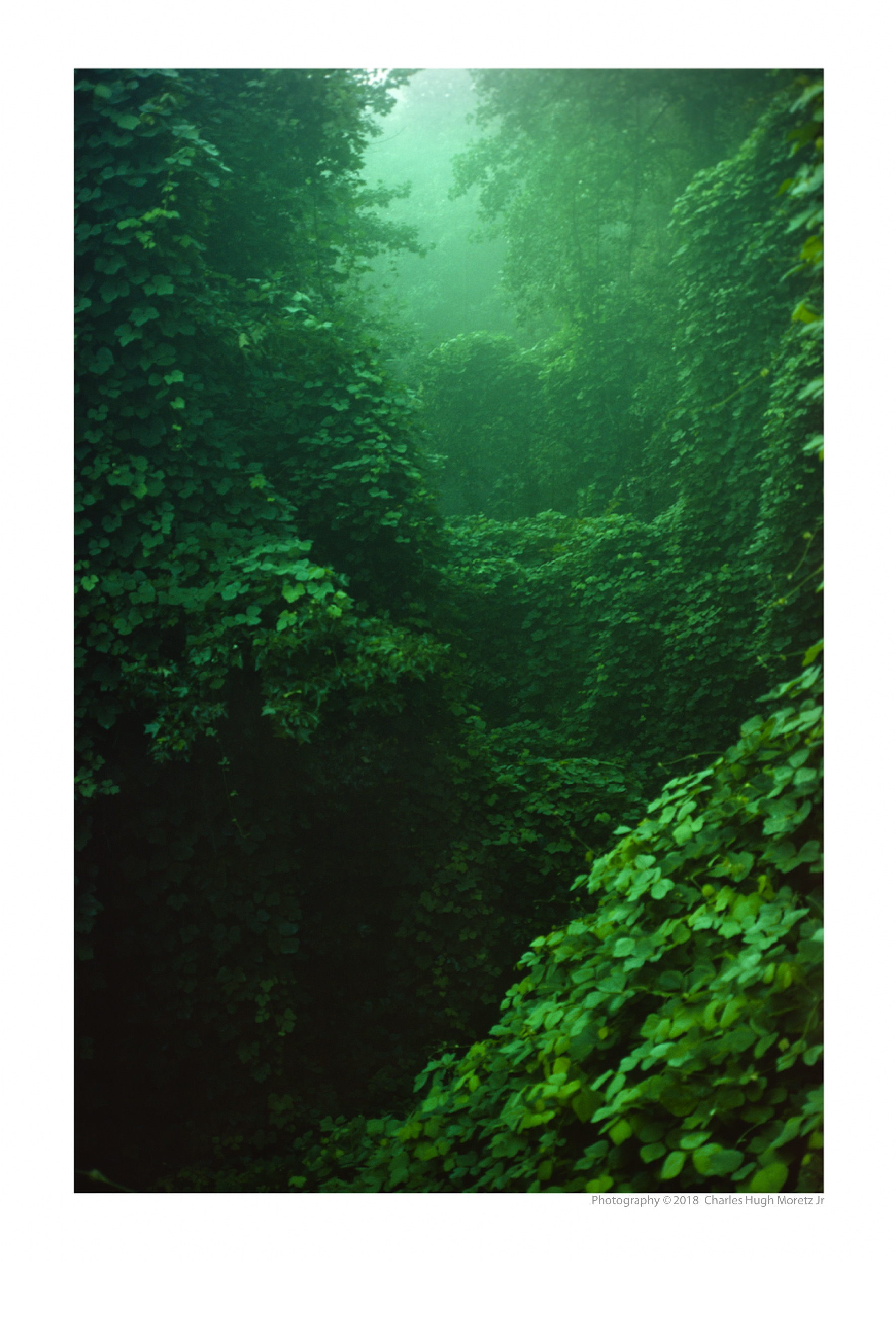 Kudzu Jungle