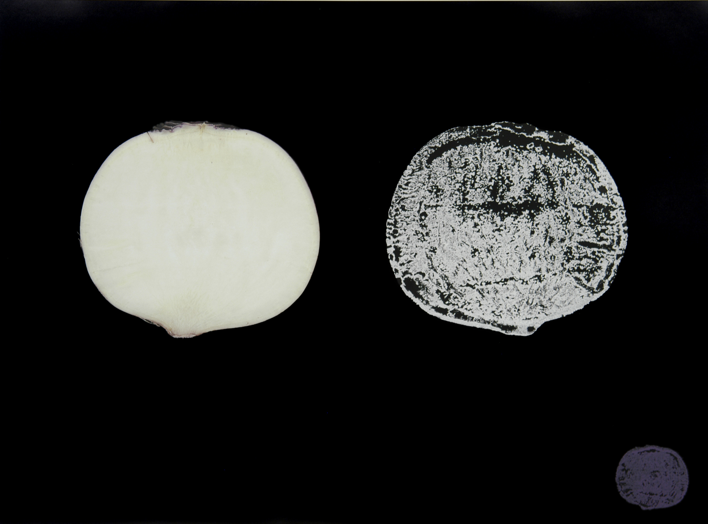 Potato Print (Turnip I)