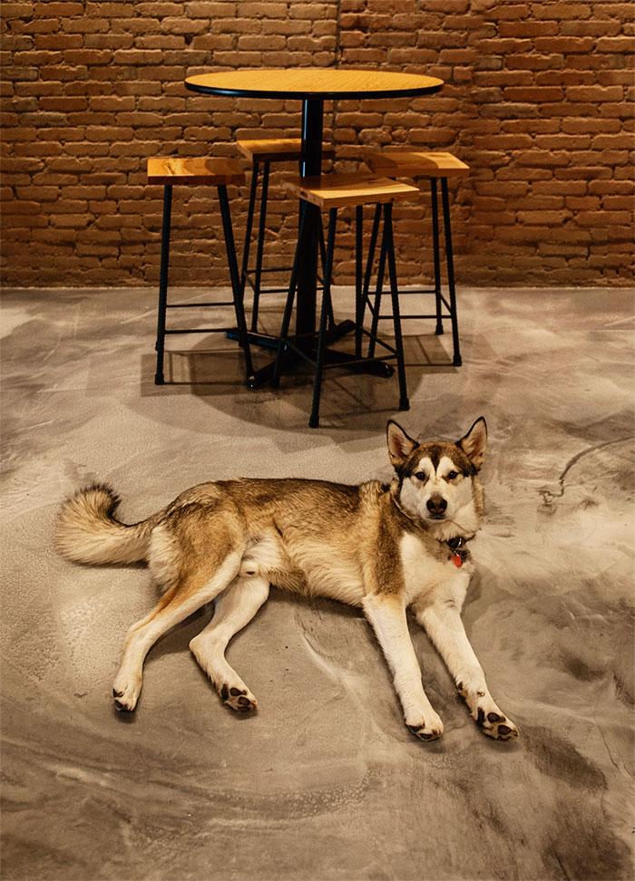 white-dog-lazy.jpg