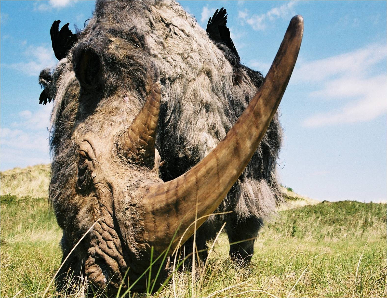 Prehistoric Rhino by Remie Bakker of Manimal Works