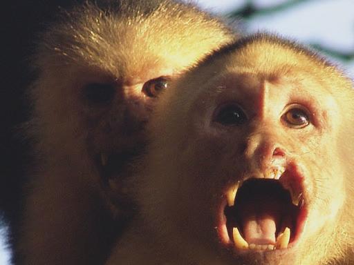 monkeys-bite