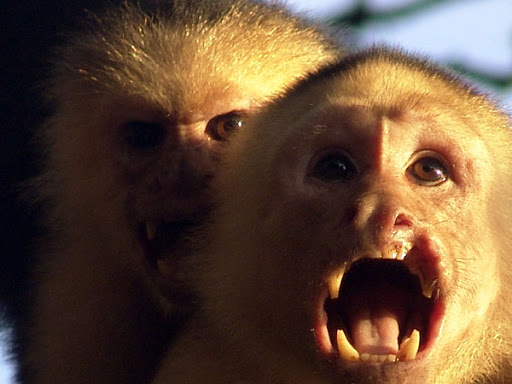 Monkeys can become aggressive for food if accustomed to humans feeding them. They have sharp teeth and will bite.