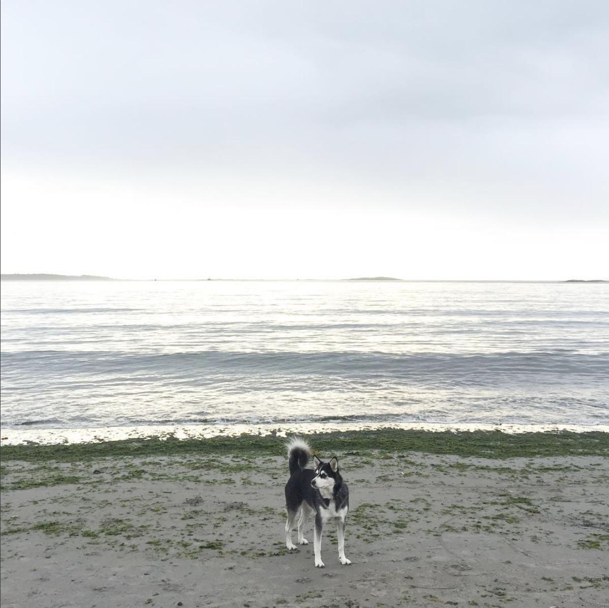 Barb: Long dog walks