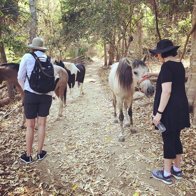 the hikes always show new things #experiences #hike #hourse #jungle #junglelive #bahiadebanderas #gooddays #goodvibes #goodspirit #plants #hikemore #norushtours
