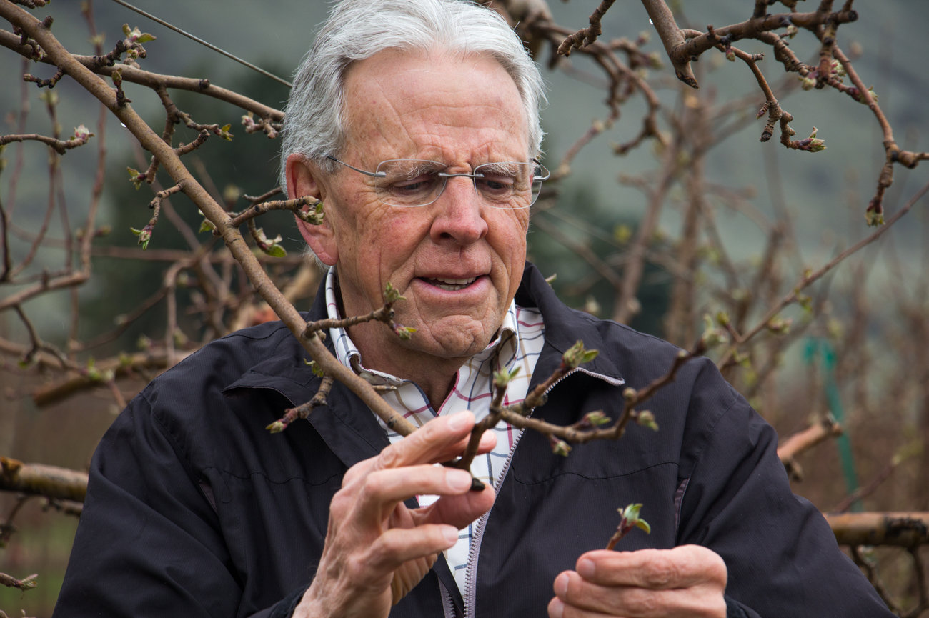 Bruce Baritt, retired apple breeder. Photo by Dan Charles, NPR.