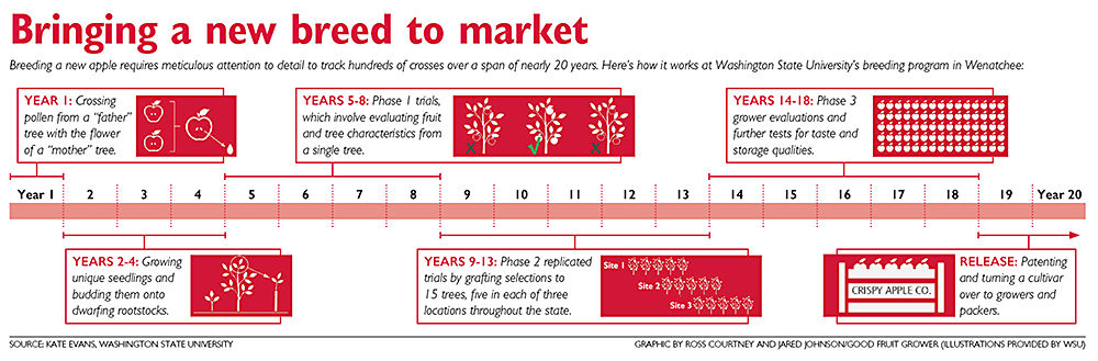 (Graphic by Ross Courtney and Jared Johnson,  Good Fruit Grower . Illustrations provided by WSU)