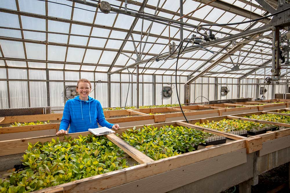 "Kate Evans, Washington State University's pome fruit breeder, is surrounded by her ""phase 0"" seedlings growing in the WSU Tree Fruit Research & Extension Center in Wenatchee, Washington, greenhouses on Monday, April 23, 2018. Evans says even though the breeding program has been around for 24 years, it's very young compared to other programs around the globe. With Cosmic Crisp a few years away from consumers, she admits there's mounting pressure to build off its success. However, Evans says the small team makes do using repurposed, antiquated facilities and inadequate staff workspaces that hamper the program's potential. For instance, this greenhouse and headhouse, once a USDA facility built over 60 years ago, has forced the staff to content with an ever growing list of non-research associated issues, from parts failures, rat invasions and potentially hazardous facility flaws. (Photo by TJ Mullinax,  Good Fruit Grower )"