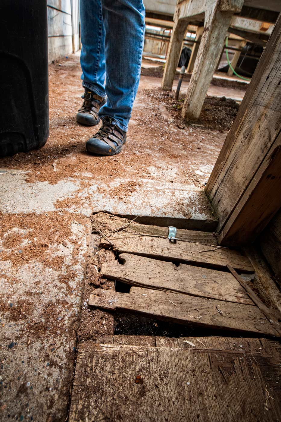 For WSU breeding program staff, following in Cosmic Crisp's success comes with potential pitfalls every day. Staff must navigate through narrow, rotting doorways, step over and around broken and cut concrete floors covered with makeshift steel plating and at worst scrap wood, just to successfully grow future apple varieties. (Photo by TJ Mullinax,  Good Fruit Grower )