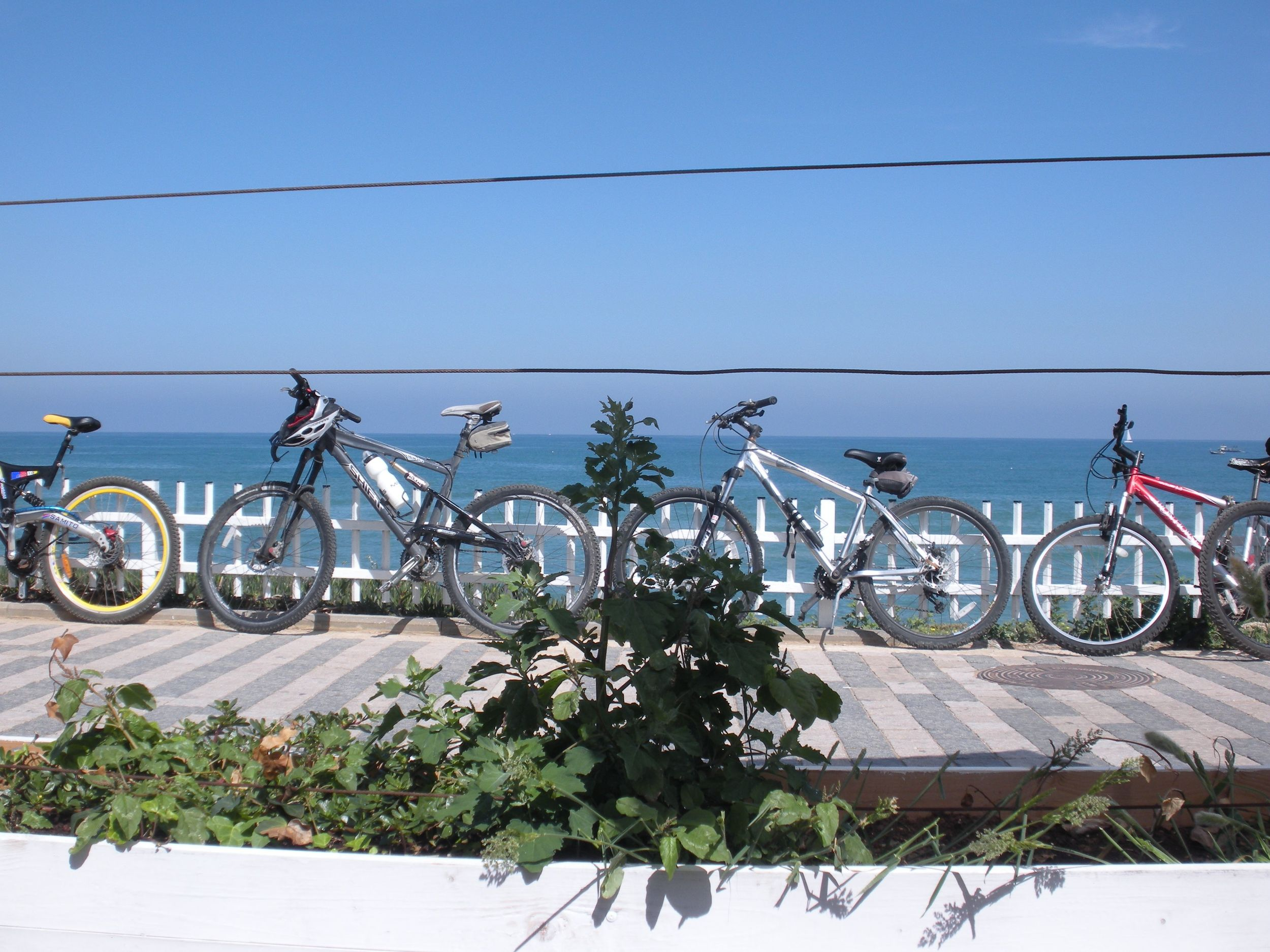Copy of bikes on the promenade tel aviv.jpg