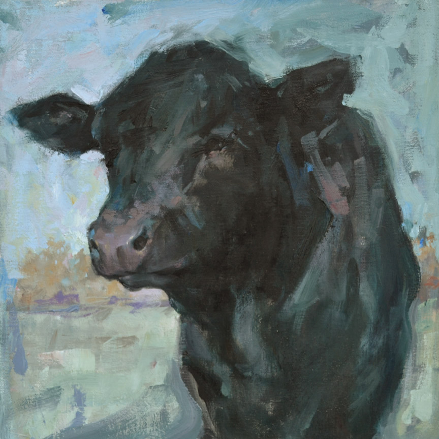 Black Calf, Oils  12 x 12