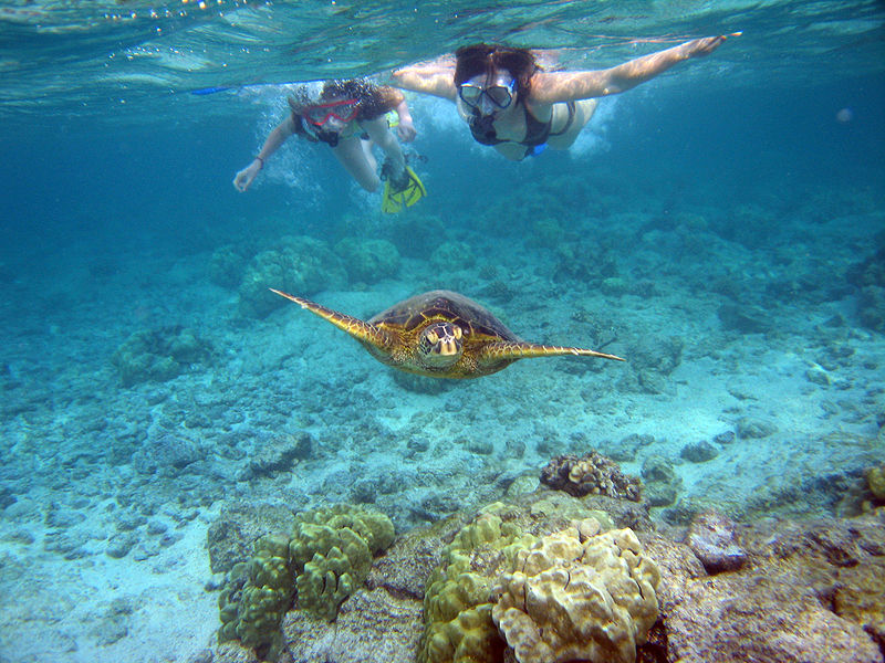 800px-Snorkelers_with_sea_turtle_(Kahaluu_Bay).jpg