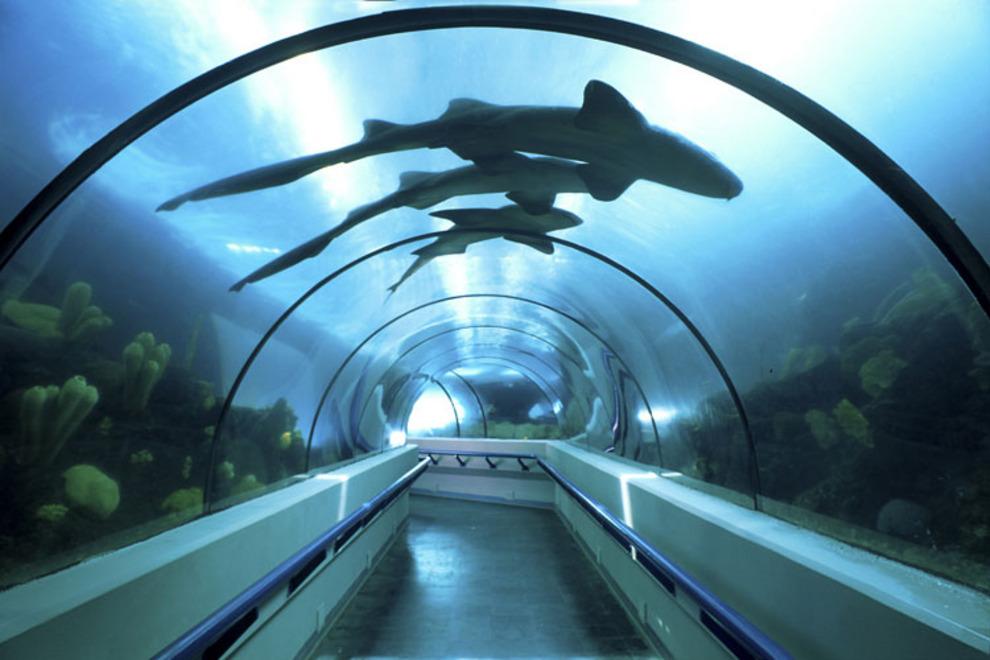 acuario-nacional-passeios-republica-dominicana-f-002_54_990x660_201406011723.jpg