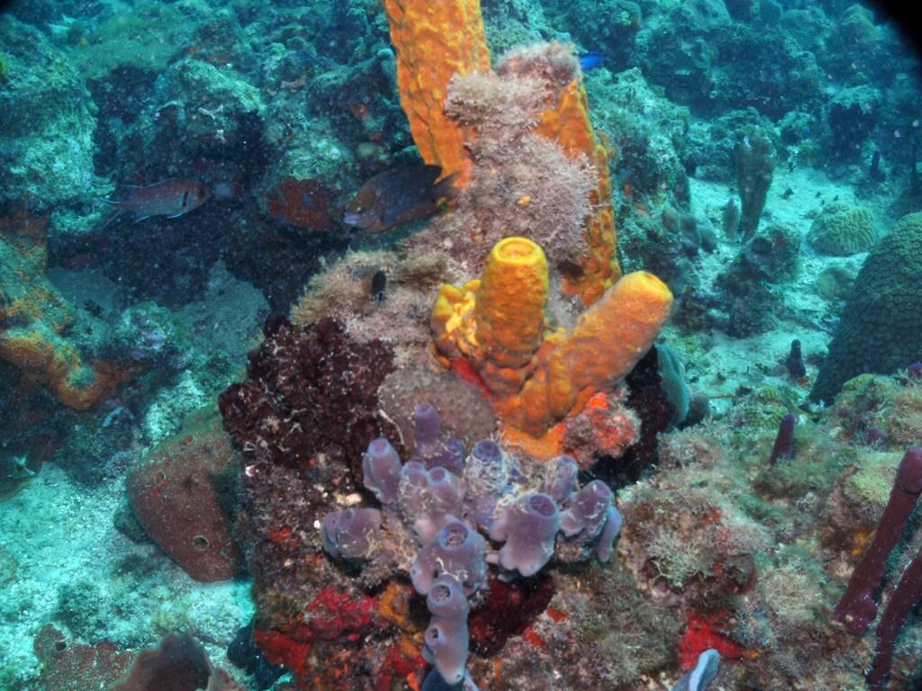 divingdominicanrepublic_corals.jpg