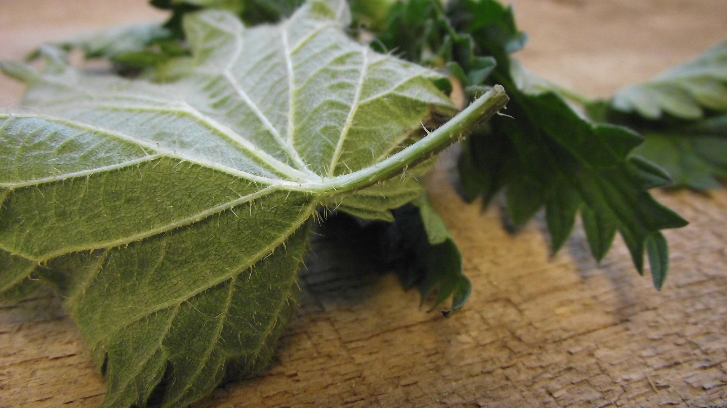 Stinging Nettles are prickly but don't let them scare you away.