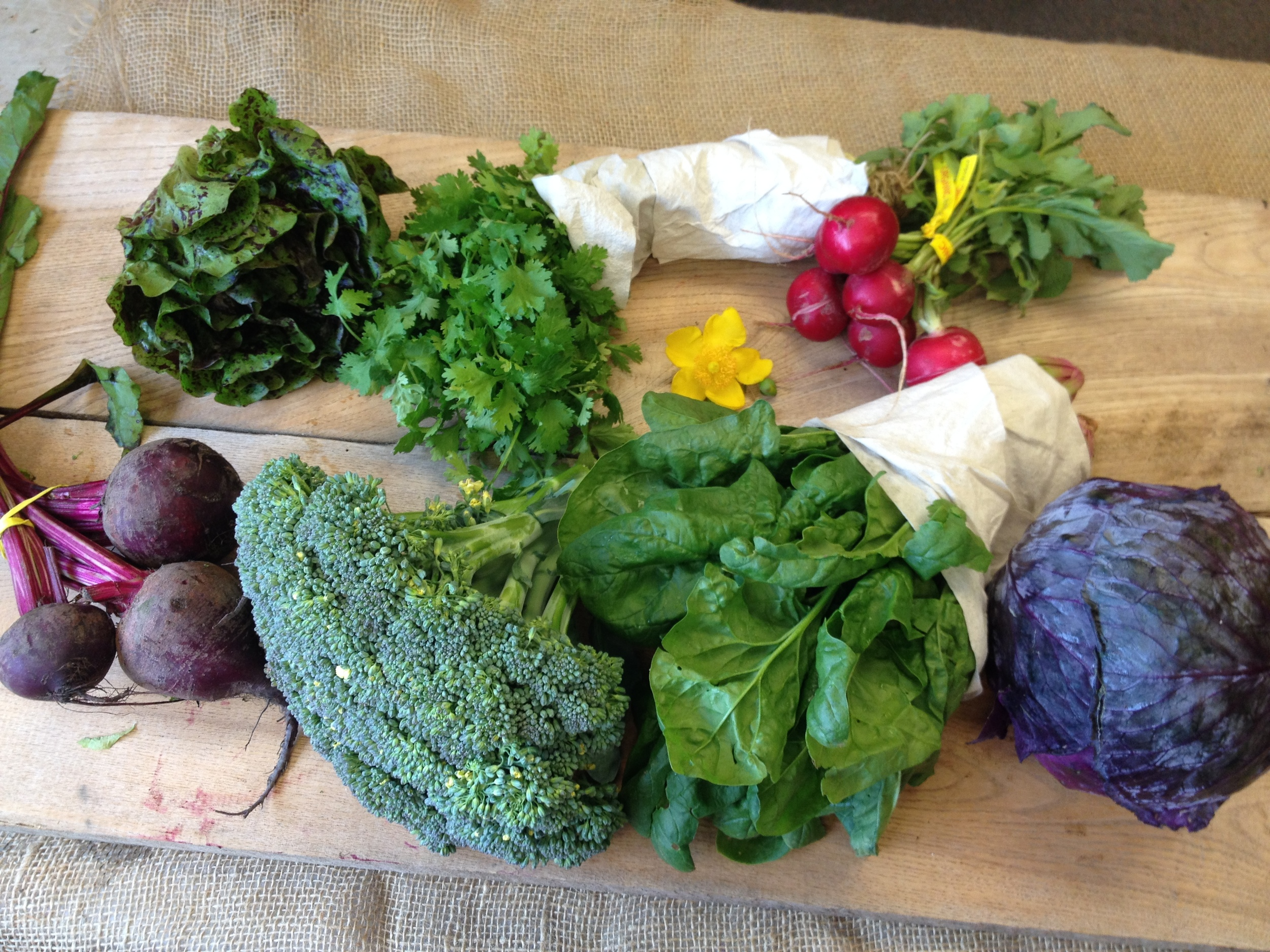 Southern Comfort small (in order from left to right) Lettuce, Herbs, Radishes, beets, broccoli, spinach, red cabbage.