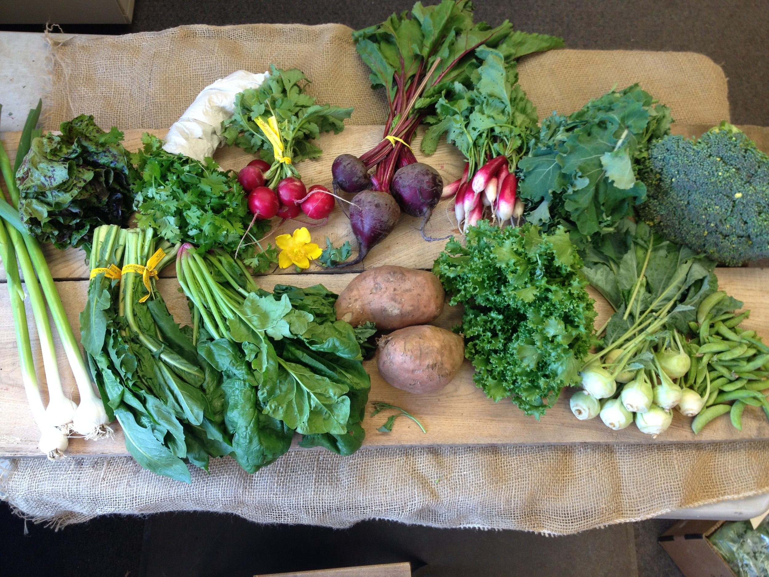 Spice of Life family- Lettuce, herbs, red radishes, beets, french breakfast radishes, kale, broccoli, green garlic, dandelion greens, spinach, sweet potatoes, endive, grab bag item (Kohlrabi and peas shown. Collards also available)