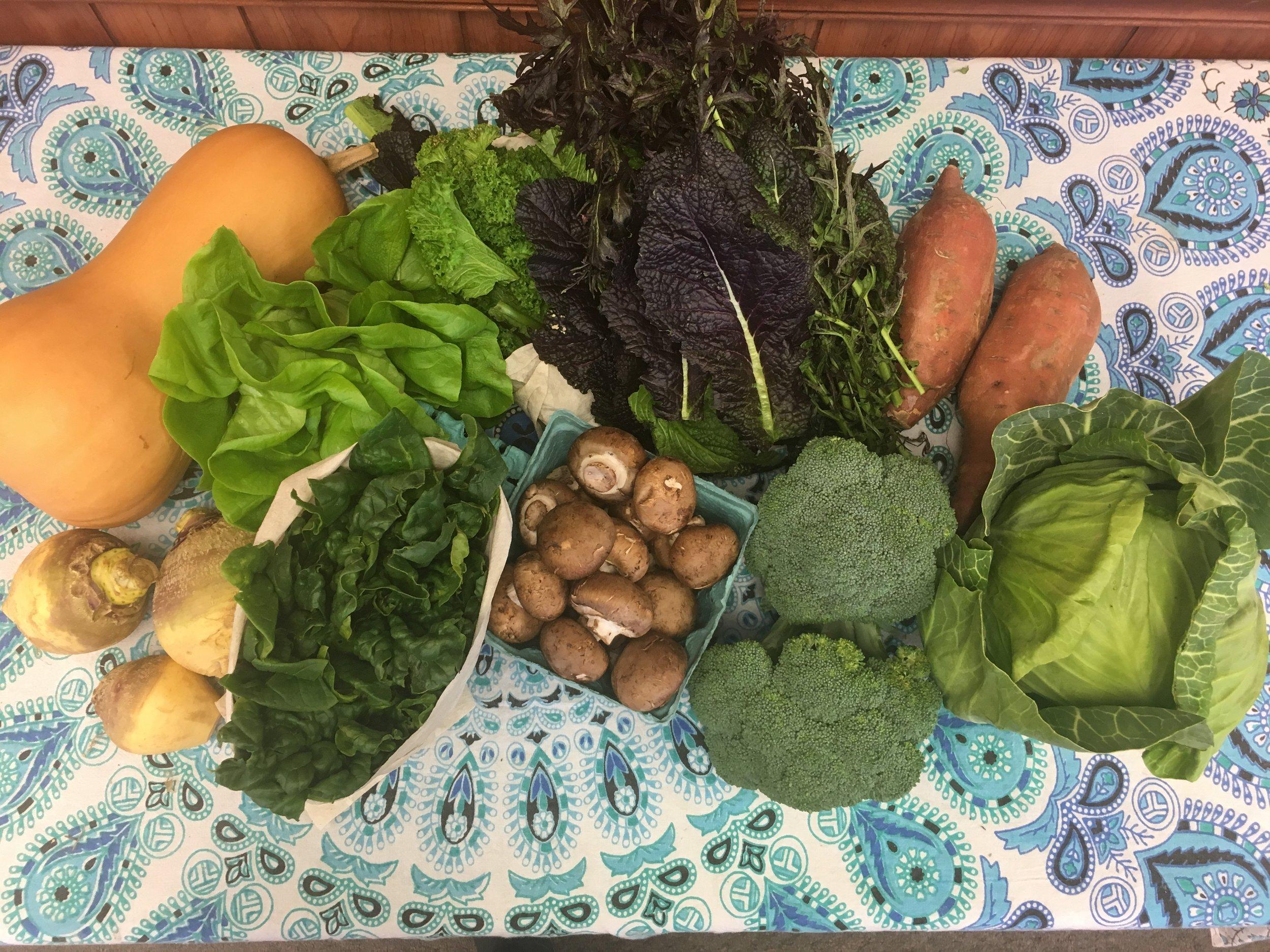 Southern Comfort family- butternut squash, Bibb lettuce, mixed mustard greens, garnet sweet potatoes, rutabaga, spinach, cremini mushrooms, broccoli, and green cabbage.