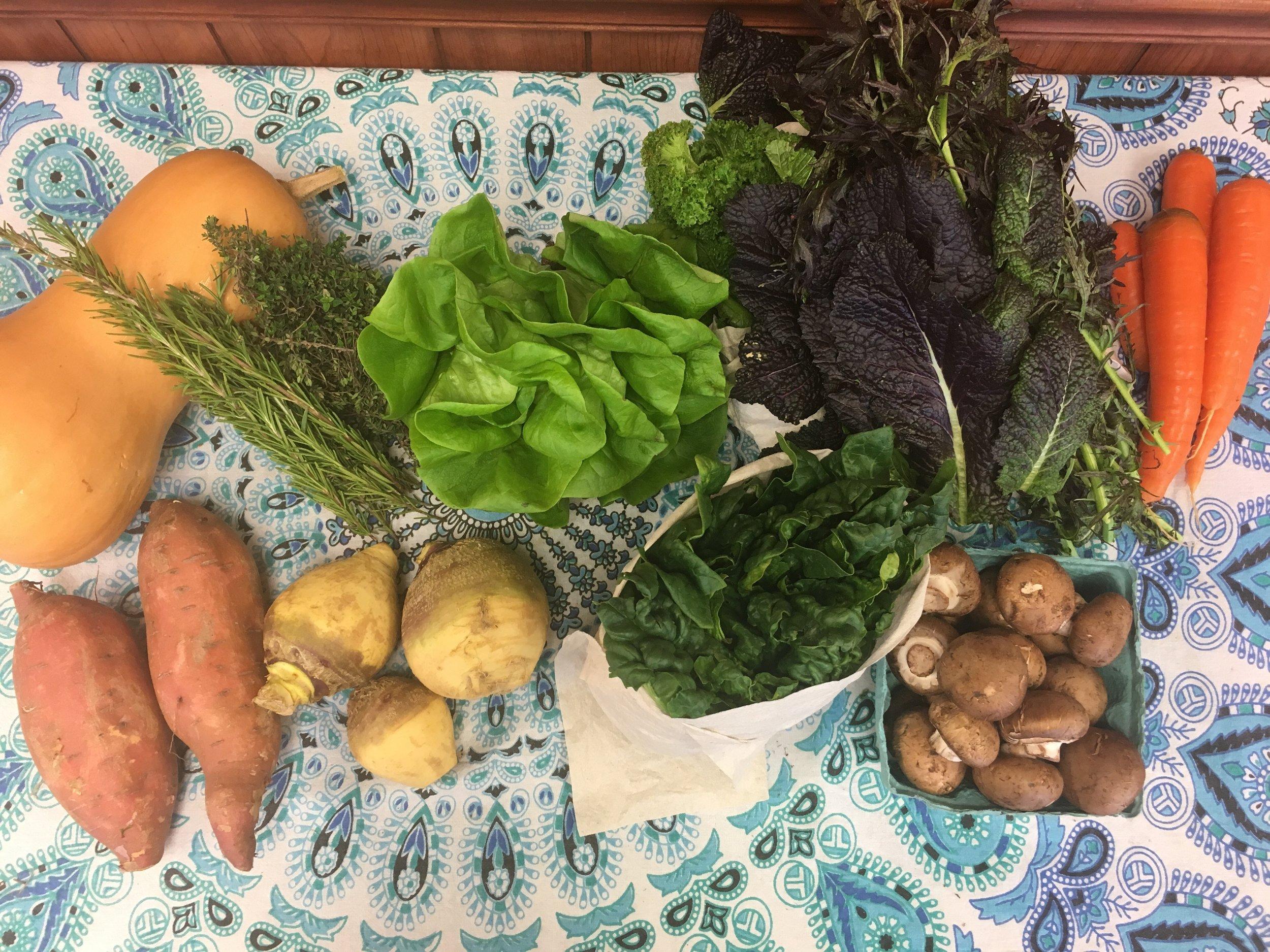 Spice of Life small- butternut squash, herbs, Bibb lettuce, mixed mustard greens, carrots, garnet sweet potatoes, rutabaga, spinach, and cremini mushrooms.