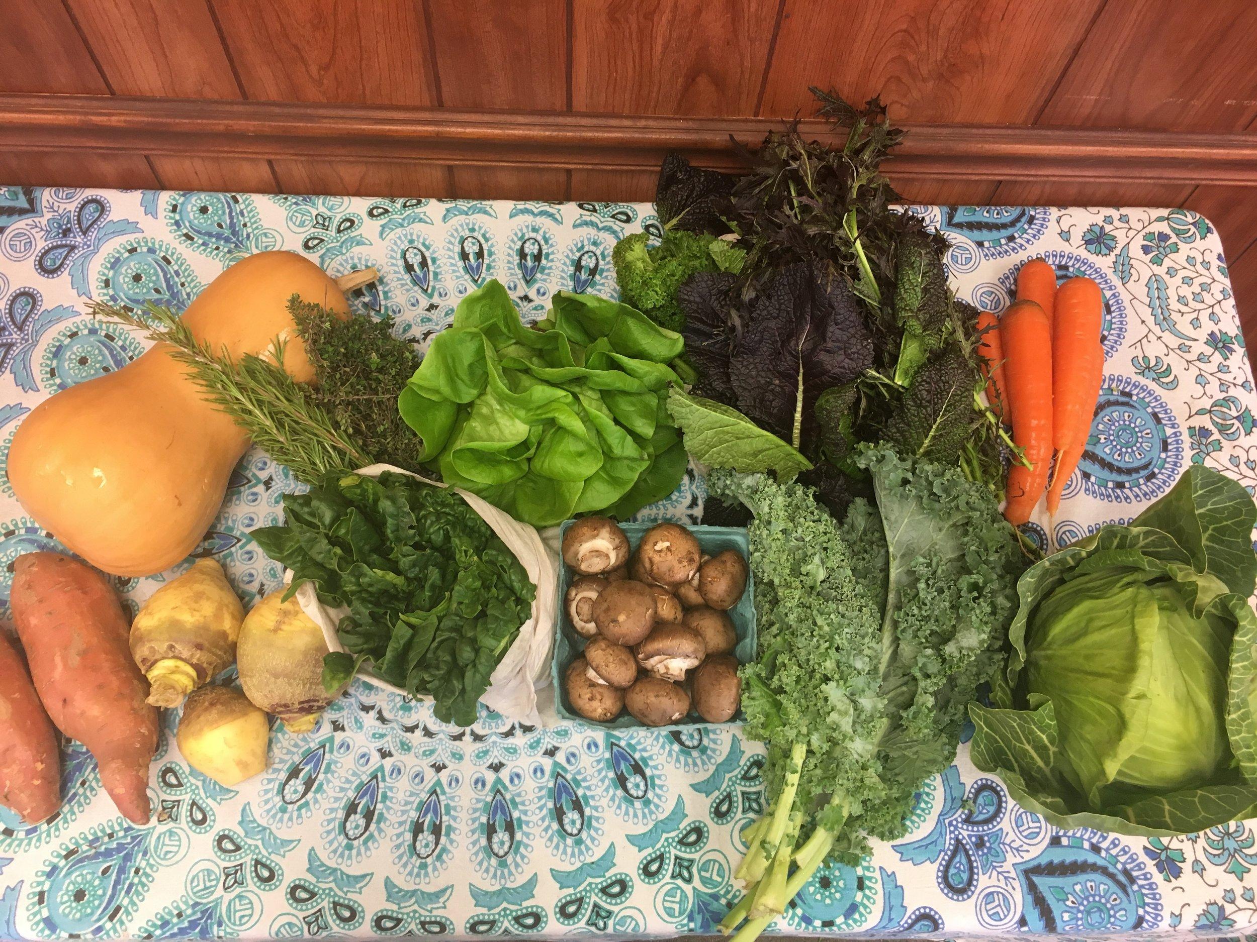 Spice of Life family- butternut squash, herbs, Bibb lettuce, mixed mustard greens, carrots, garnet sweet potatoes, rutabaga, spinach, cremini mushrooms, curly kale, green cabbage.