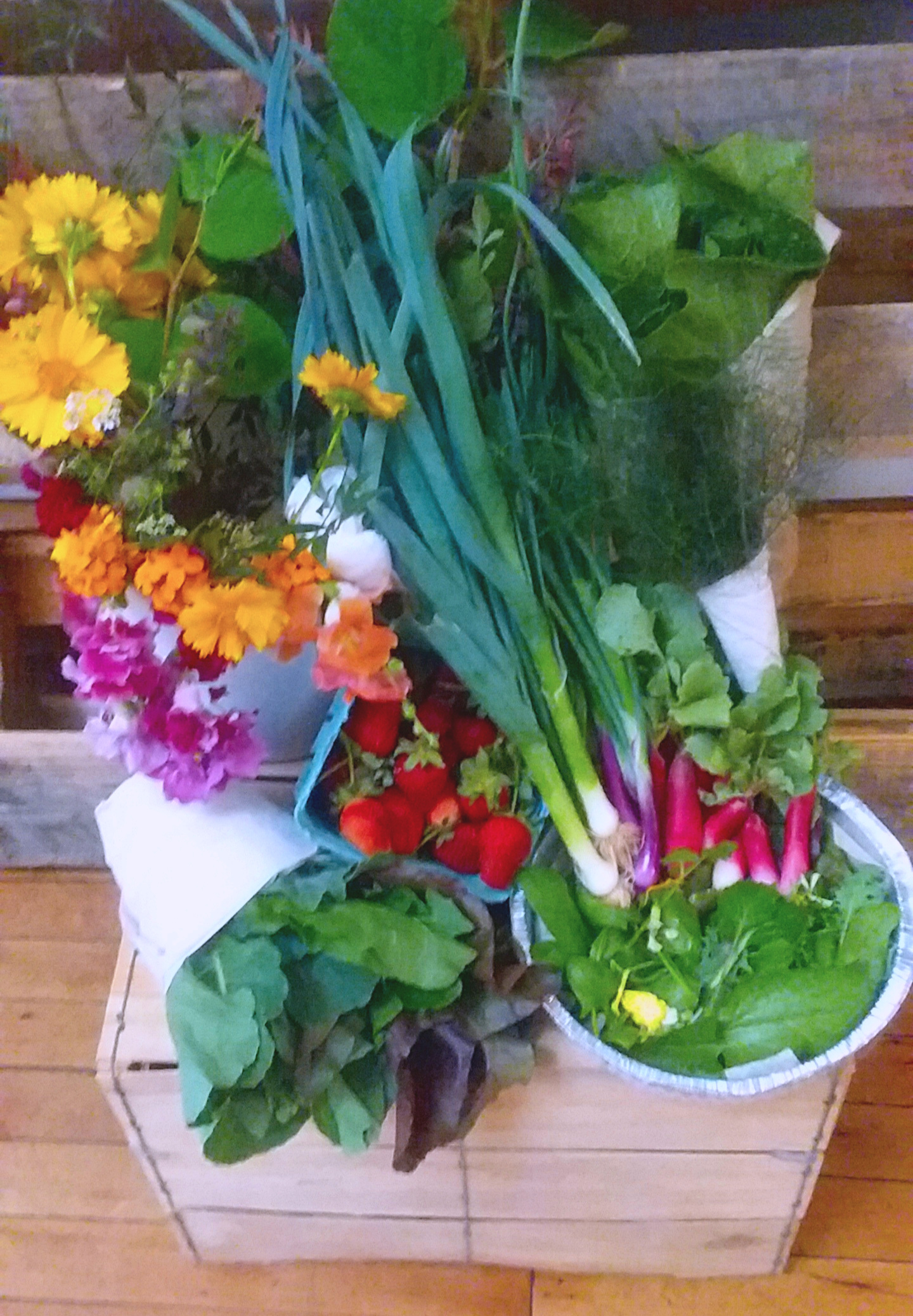 This week we have Flowers, Leeks, Bok Choi,Bronze Fennel, French and Easter Radishes, Baby Salad Mix, the best Strawberries we have ever eaten, and Mixed Greens ~Collard, Beet, Sorrel, Cabbage, and Dandelion Greens~ Enjoy! -