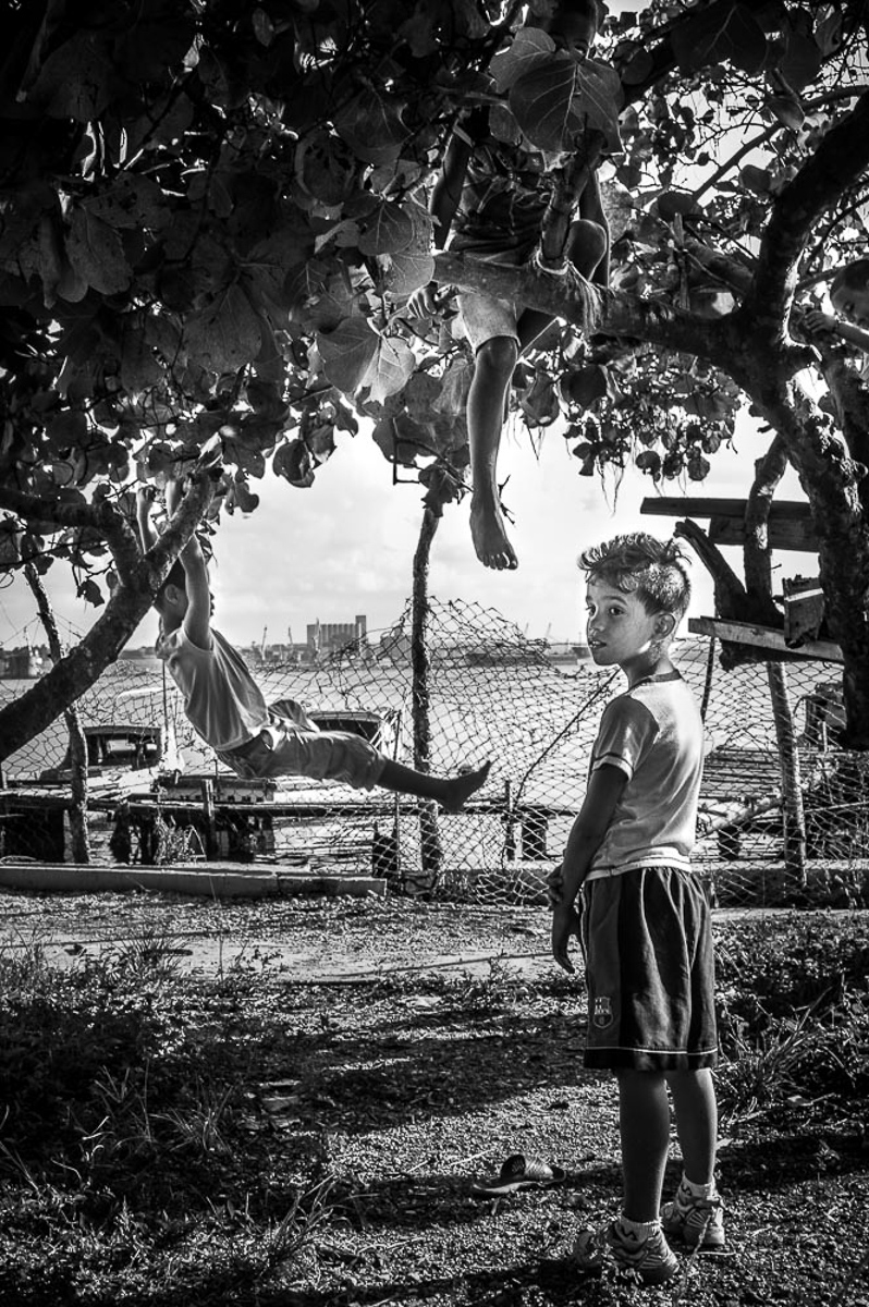 Boys in Tree, Casablanca, Cuba 2014