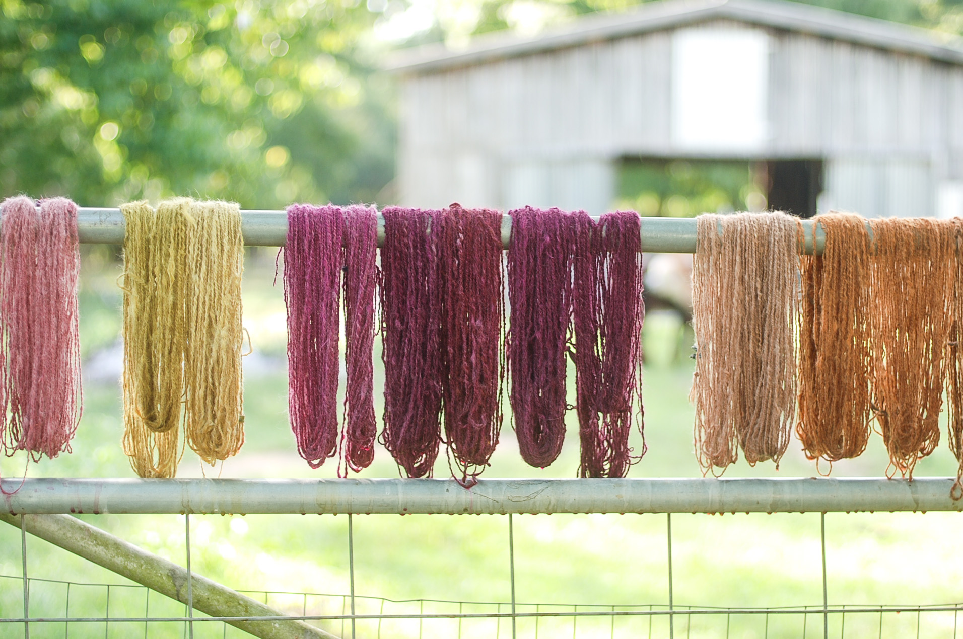 Handspun Yarn dyed with locally foraged color