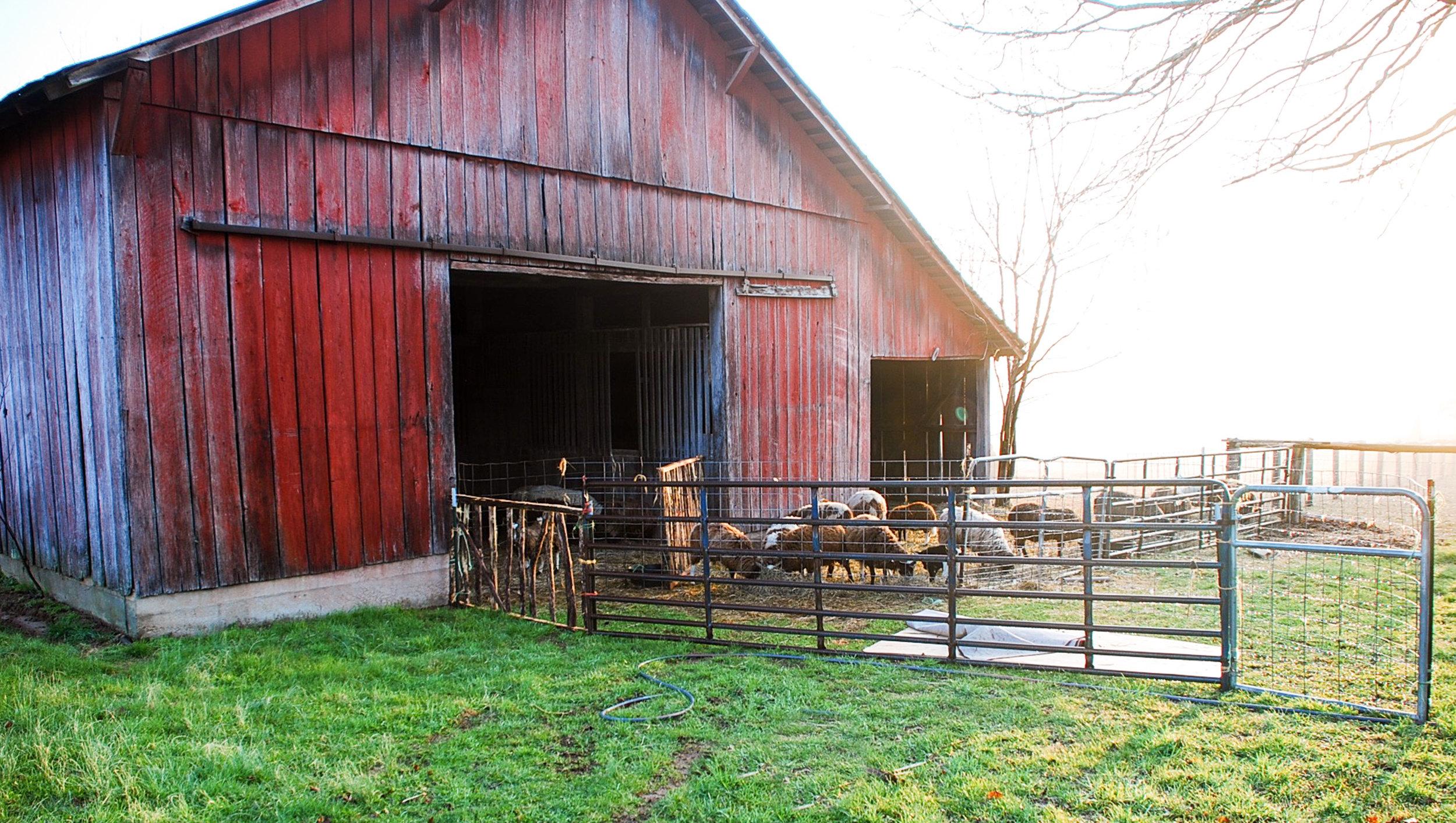HH Farm Shearing 2018-9.jpg