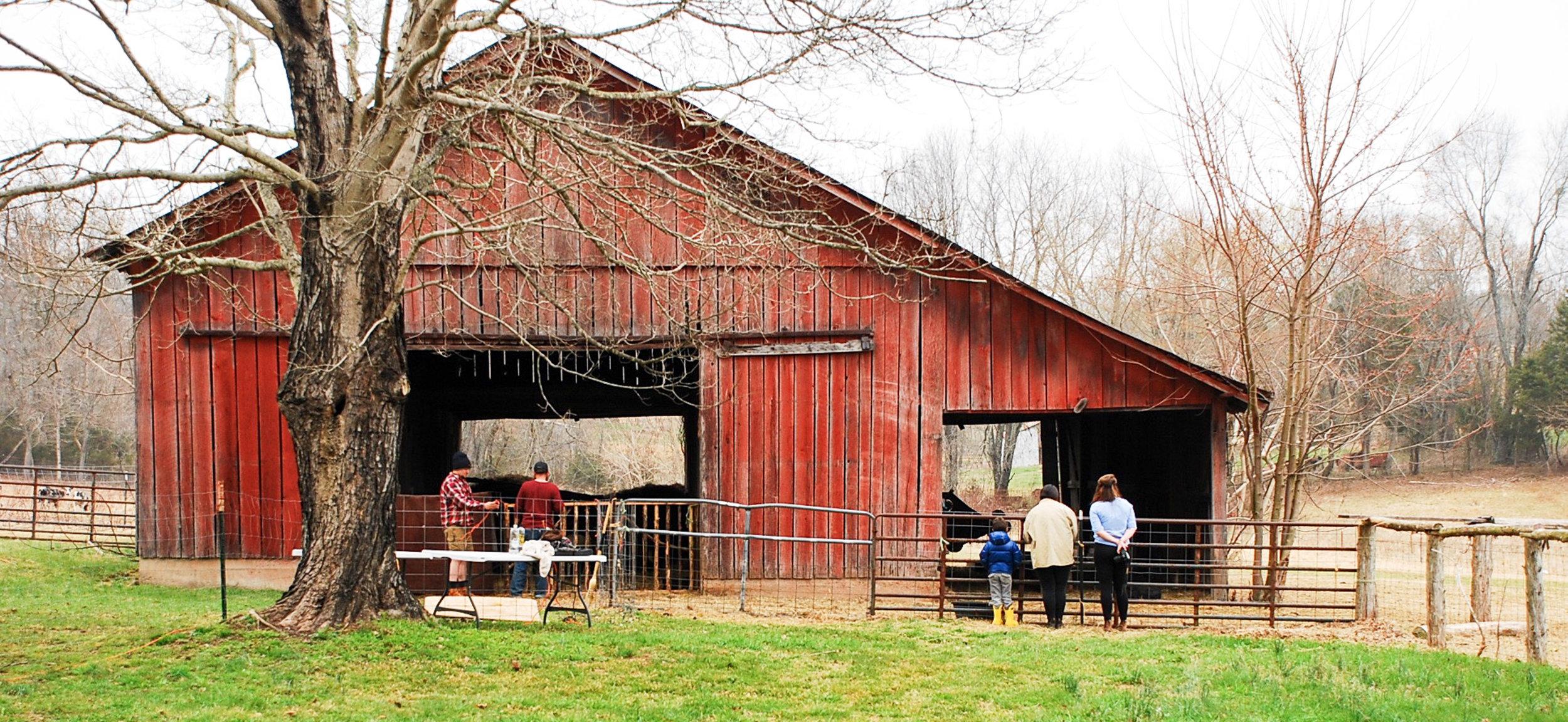 HH Farm Shearing 2018-41.jpg