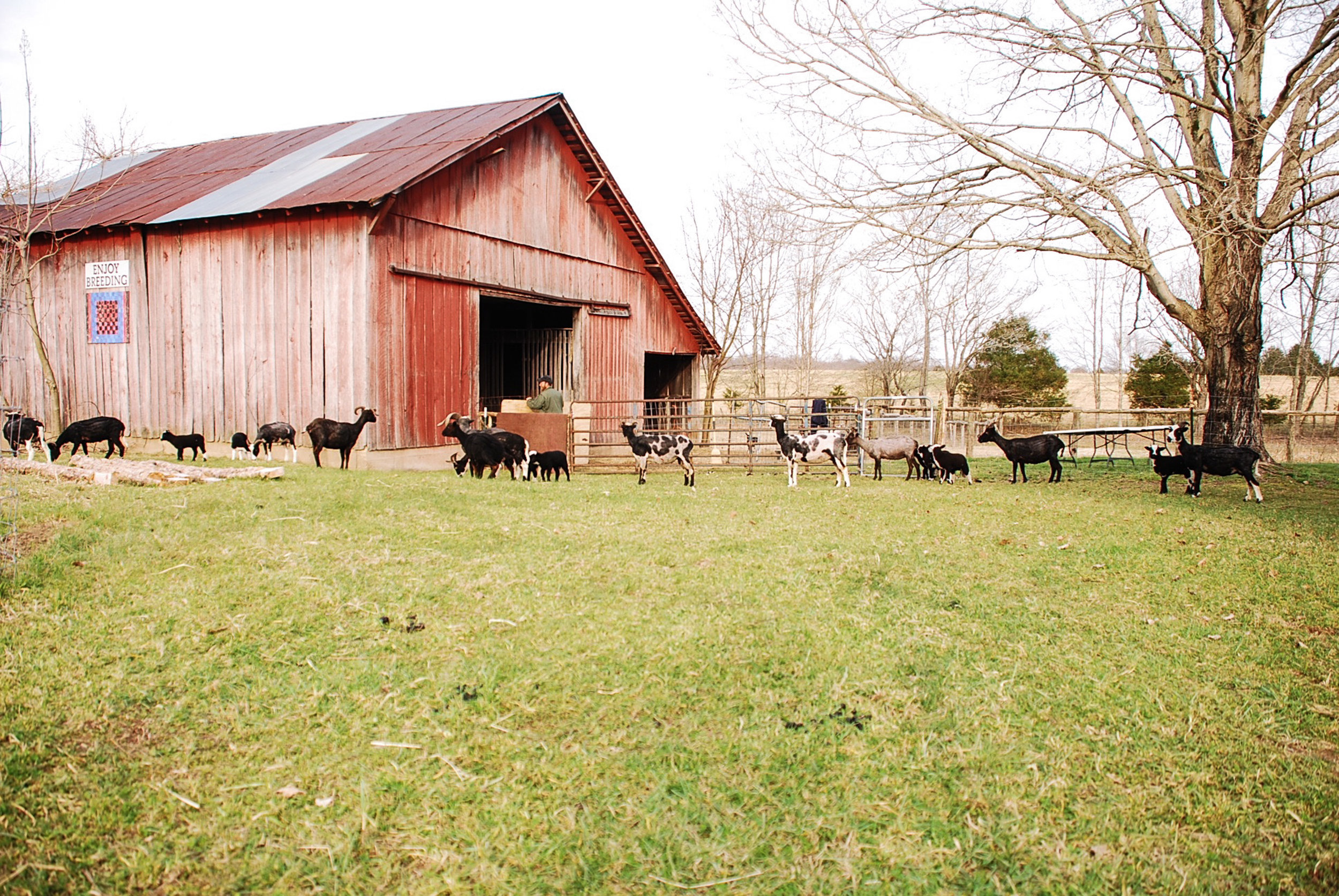 HH Farm Shearing 2018-76.jpg
