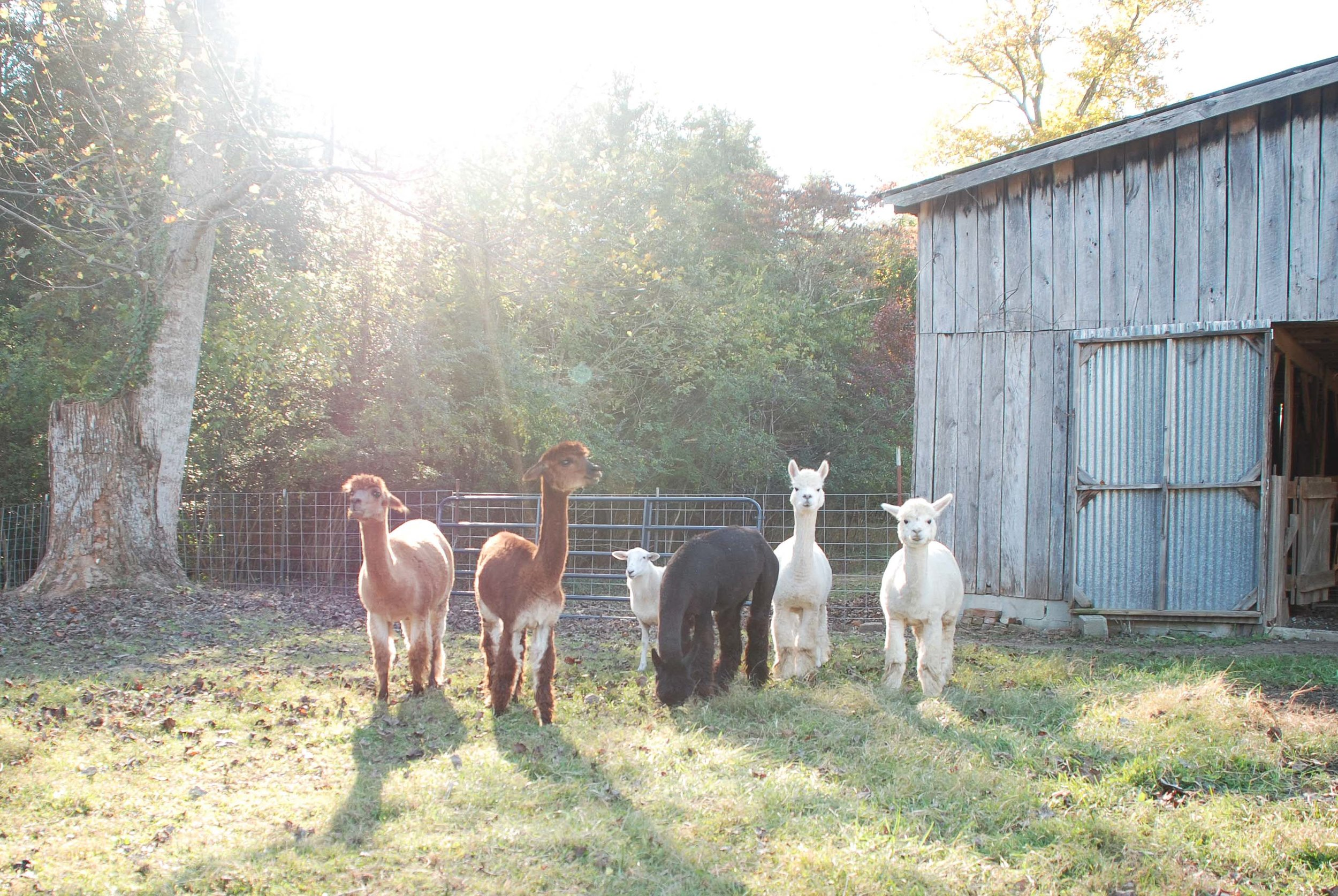 Girls front pasture autumn-2.jpg