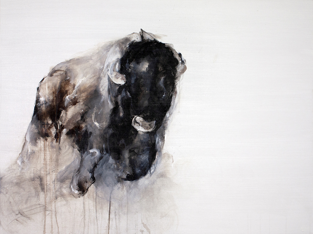 bison24_999.jpg