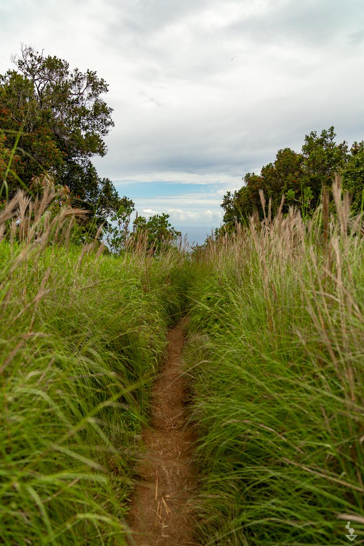 Kauai - Portfolio-17.jpg