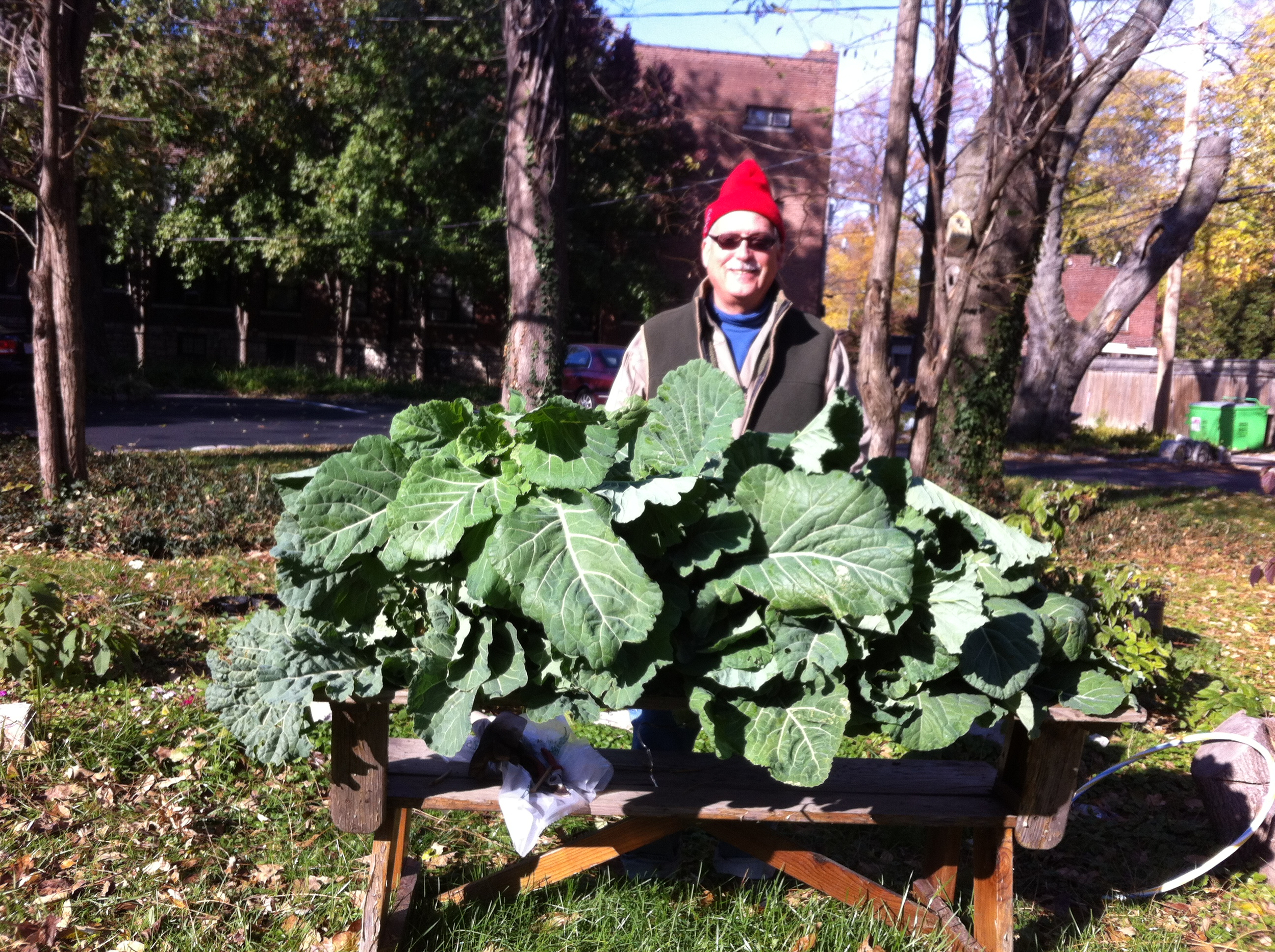 Farm Manager Arthur with a particularly large harvest of greens!