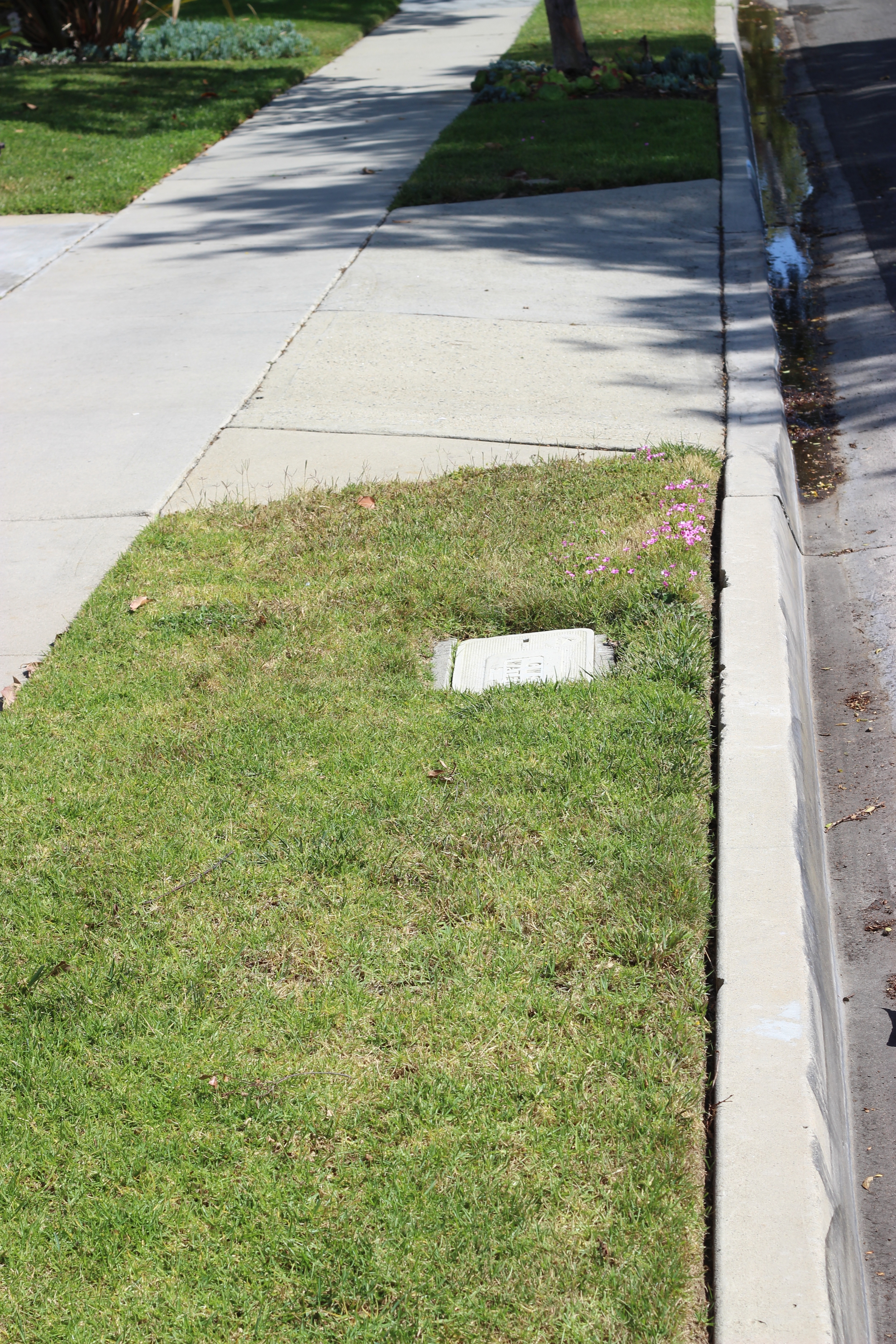 The water meter is most often by the street. Rarely, it can be at the back of the property.
