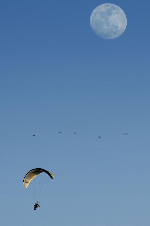 A flock of ducks flies past an ultralight pilot near White Rock Road in El Dorado Hills on Friday, March 14, 2014.