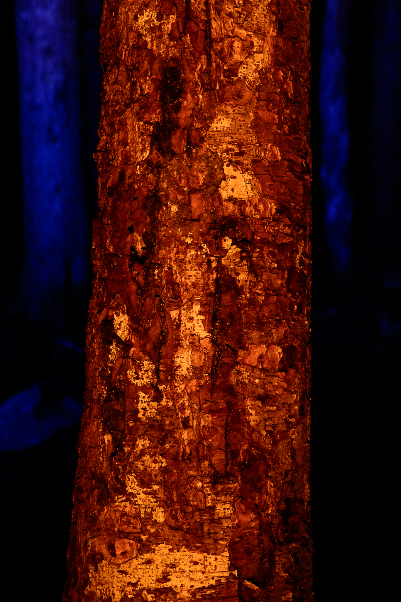An abstract image created by headlamps and a small fire in the backcountry of Olympic National Park, WA.
