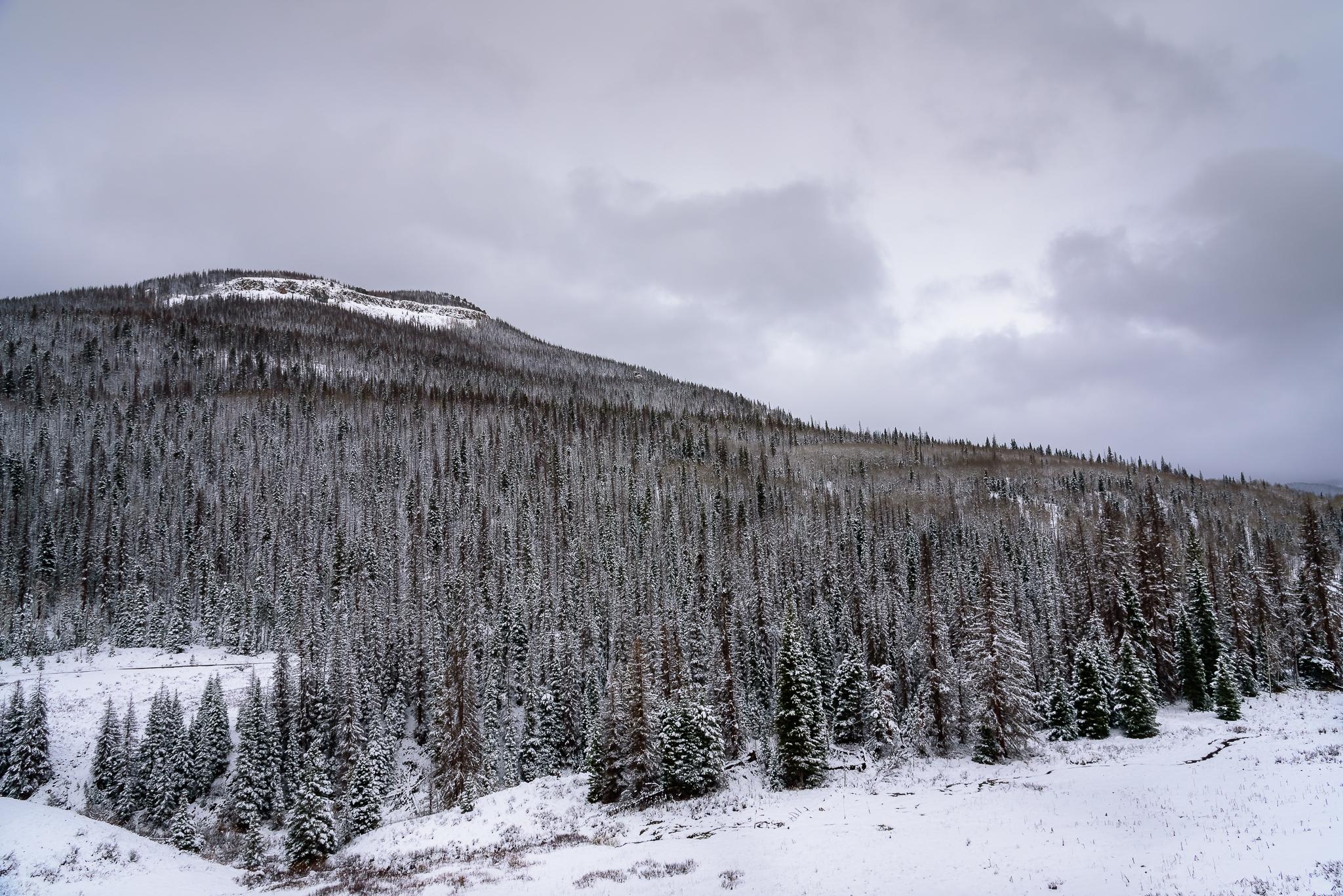 Continental Divide. Wolf Creek Pass, CO.