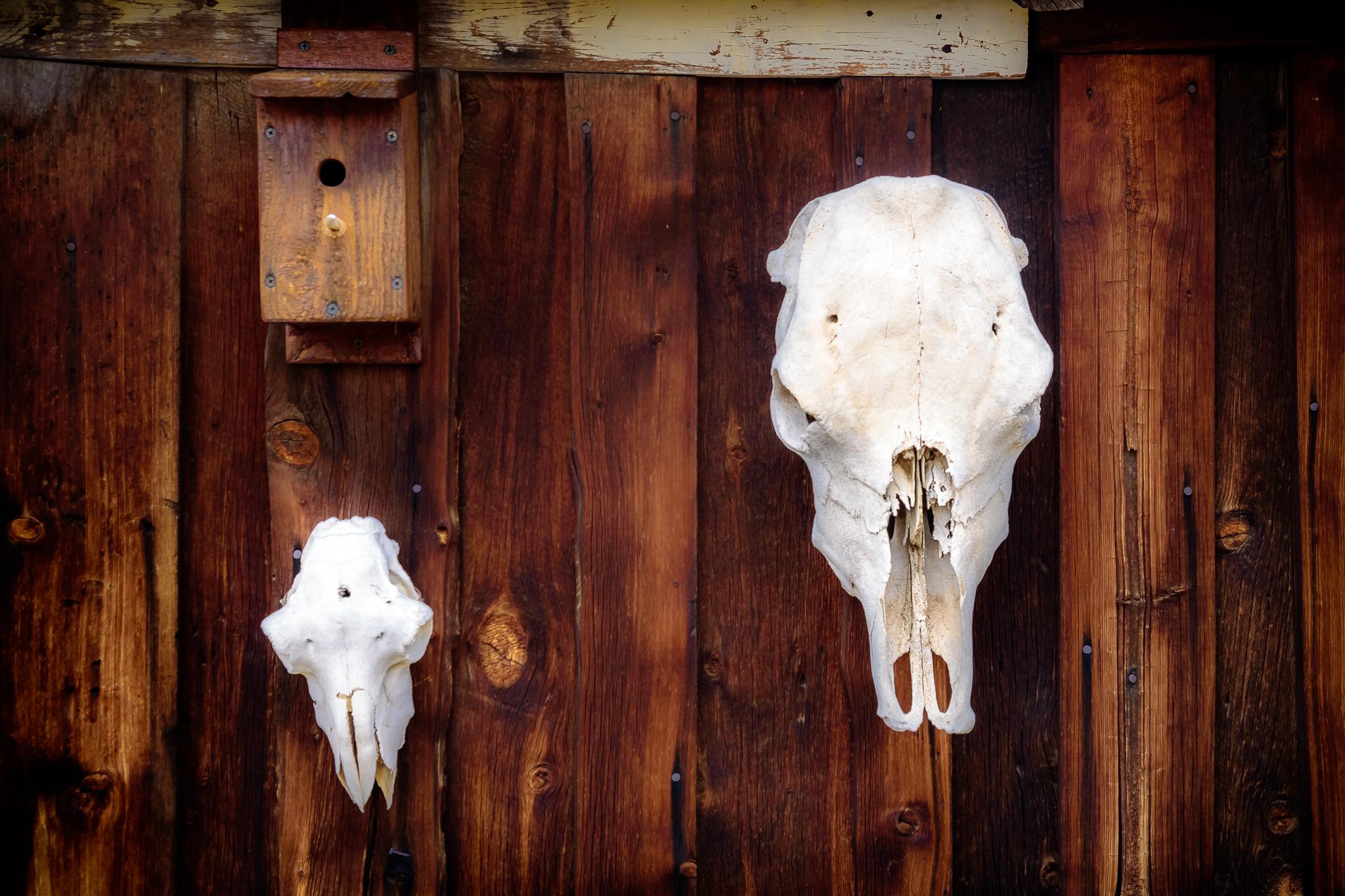 Skull game: strong. Walden, CO.