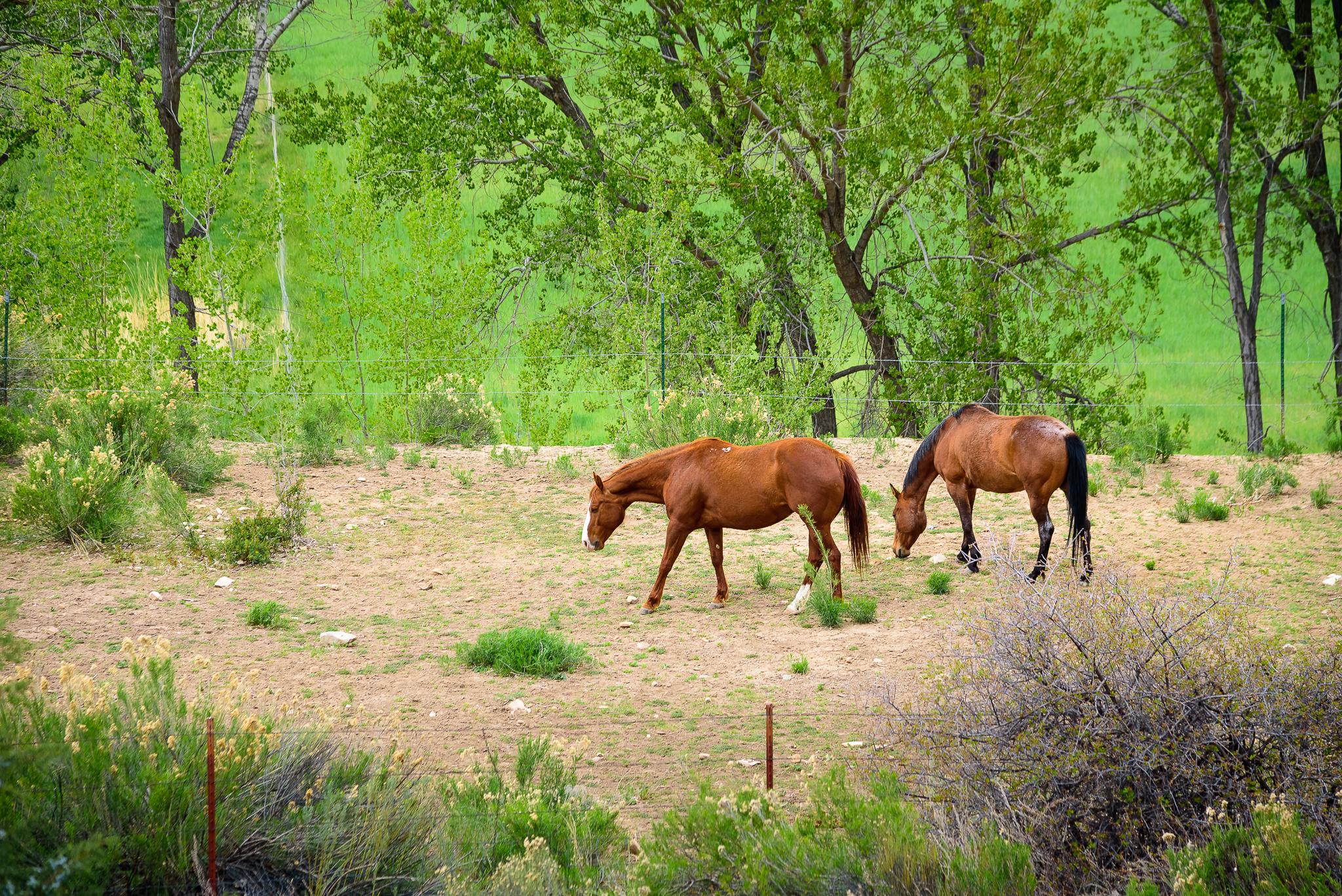 Wildlife spotting engage. Mt. Carmel Junction, UT.