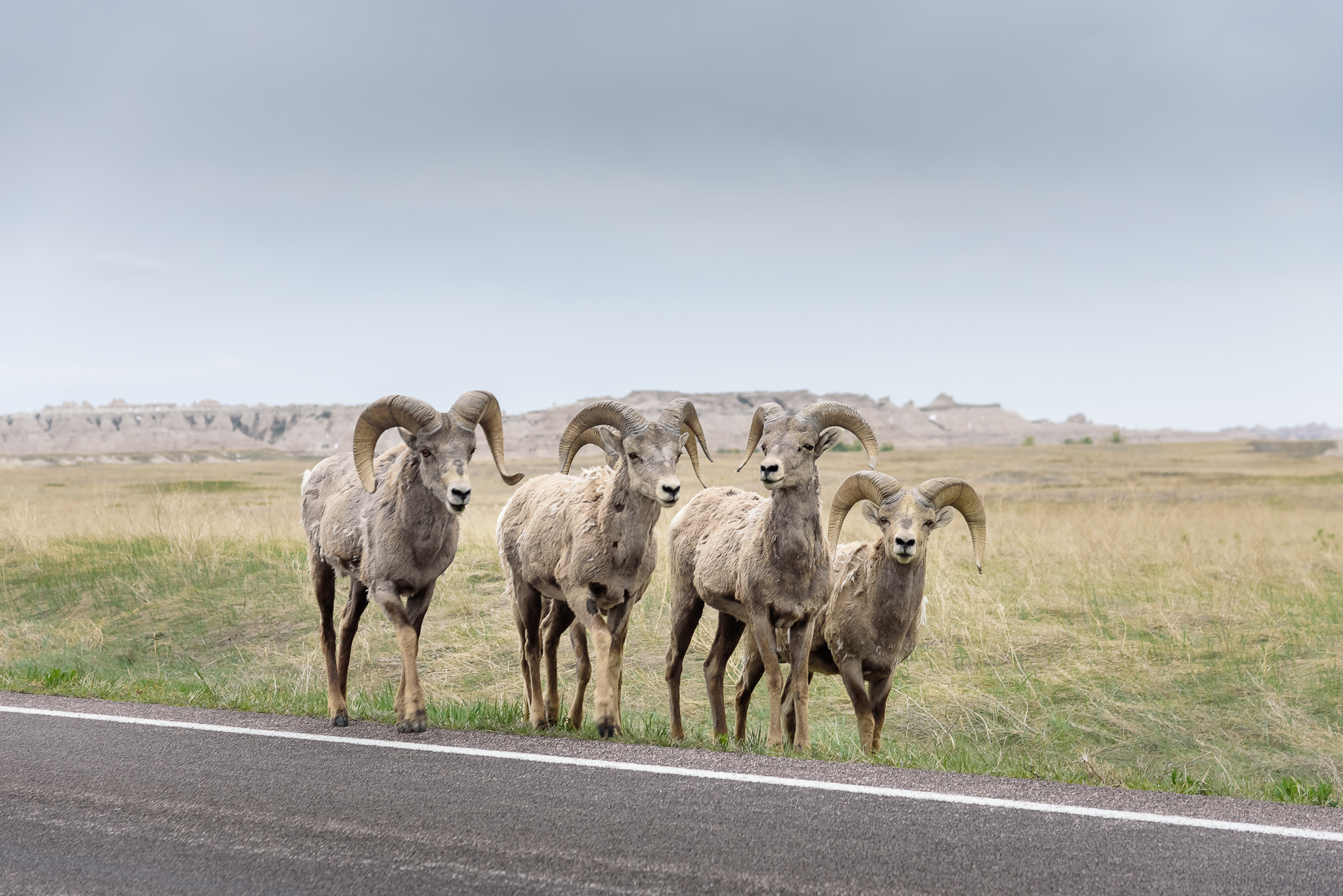 Who invited these dudes to the party? Badlands National Park, SD.