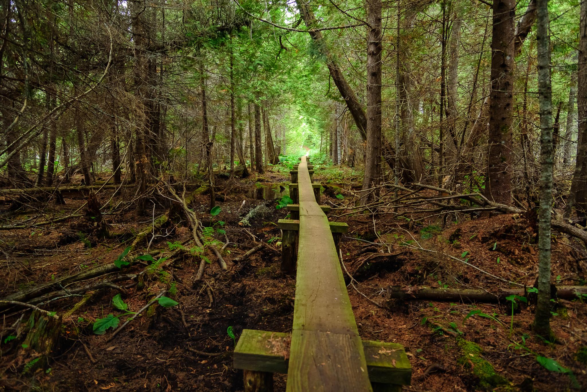 Walk the plank. Isle Royale, NP.